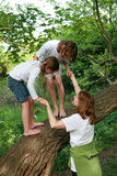 Family tree. Family playing on a branch of tree.Mother helping and speaking rnthen royalty free stock image