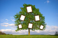 Family Tree. Lonely tree with empty picture frames re: Family Tree Stock Image