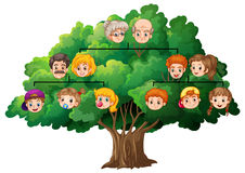 Family tree. Illustration of a completed family tree Stock Images