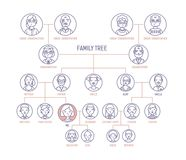 Family tree, pedigree or ancestry chart template with men s and women s portraits in round frames. Representation of