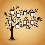 Family tree with photo frames. Memories. Insert your photo into template frames. Collage vector illustration Stock Photos