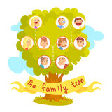 Family tree with portraits of relatives, genealogical tree vector Illustration. Isolated on a white background Stock Photos