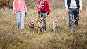 Family of tribe man walking on nature on the habits of the breeds of dogs Staffordshire terrier