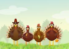 Family turkeys Stock Images