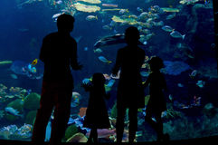 Family with two kids in oceanarium, silhouettes. Silhouettes of parents and children looking at underwater world in oceanarium stock photography