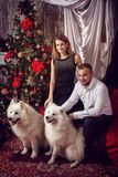 Husband and wife with white dogs at the Christmas tree. A family with two Samoyed dogs near a Christmas tree Stock Photos