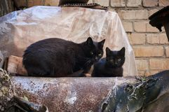 A family of two street black cats is heated on a pipe. Royalty Free Stock Photography