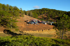 Family vacation, camp, pine forest, dalat, vietnam Royalty Free Stock Photography
