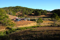 Family vacation, camp, pine forest, dalat, vietnam Royalty Free Stock Images