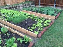 Family vegetable garden in the yard Stock Photo