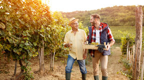 Family in vineyard celebrating harvesting grapes. Father and son stock photography