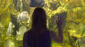 Family visits an oceanarium. Steadycam shot of a Woman looking at a big a aquarium with a tropical fishes and touches. The glass stock video