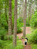 Family walk. Three hikers / family walk in the forest with trees all around Royalty Free Stock Images