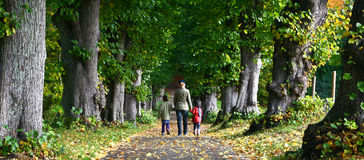 Family walk. Forest in autumn in Denmark Royalty Free Stock Image