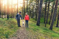 Family walk in the forest Royalty Free Stock Photos