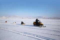 Family walk on a snowmobile with dogs