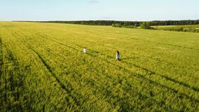 Family Walking Around Field stock footage