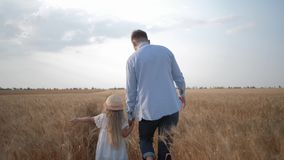 Family walking in field, young father walking with little girl daughter touching the wheat sunny golden spikelets in stock video footage
