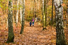 Family Walking In Forest Royalty Free Stock Photography