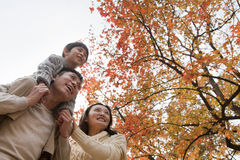 Family walking through the park in the autumn, little boy sitting on his fathers shoulders Stock Photos