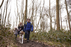 Family walking with pet dog in a wood, low angle view Stock Photos