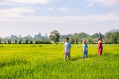 Family walking in rice field Stock Images