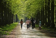 Family walking woods Stock Photography