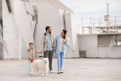 The family walks with a dog. stock photo