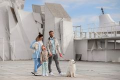 The family walks with a dog. royalty free stock images