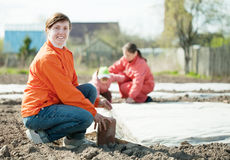 Family warms the soil with polyethylene. Happy family warms the soil with polyethylene in spring Stock Photography