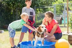 Family washing dog in pool of animal shelter Royalty Free Stock Images