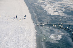 Family watch swans and ducks in the frozen Danube river from the frozen beach Stock Photos