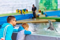 Family watching the dolphin show Stock Photography