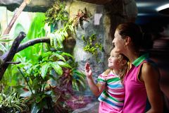 Family watching snake in zoo terrarium stock photography