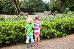 Kids watch zebra at zoo. Children at safari park. Family watching zebra in zoo. Boy and girl in tropical safari park during summer vacation in Singapore. Kids Stock Image