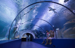 Family in a water tunnel Royalty Free Stock Photo