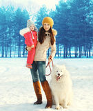 Family in winter, happy mother and child walking with white Samoyed dog Royalty Free Stock Image