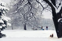 Family in winter Park near the river,squirrel under a tree. Family in winter Park near the river. Squirrel under a tree in the snow royalty free stock image