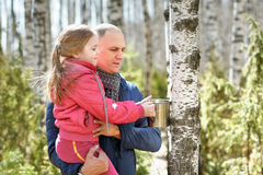 Family in wood collecting birch sap to steel mug Stock Image