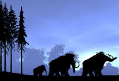Family of Woolly Mammoth Royalty Free Stock Images