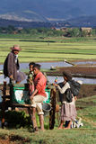 A family at work in the rice fields of Madagascar highlands Royalty Free Stock Images