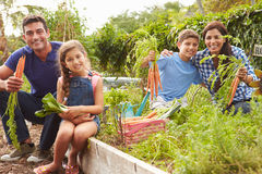 Family Working On Allotment Together Stock Images