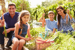 Family Working On Allotment Together Stock Image