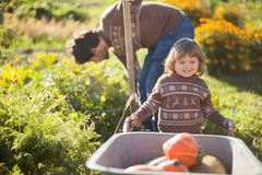Toddler girl and her father harvesting orange pumpkins at the wheelbarrow. Family working at the farm, countryside. Toddler gardener in the garden, autumn Royalty Free Stock Photos