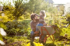 Toddler girl and her father harvesting orange pumpkins at the wheelbarrow. royalty free stock images