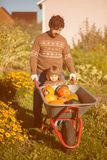 Toddler girl and her father harvesting orange pumpkins at the wheelbarrow. Family working at the farm, countryside. Toddler gardener in the garden, autumn Royalty Free Stock Photography