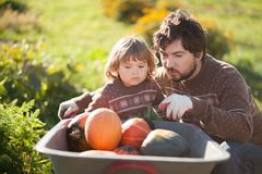 Toddler girl and her father harvesting orange pumpkins at the wheelbarrow. Family working at the farm, countryside. Toddler gardener in the garden, autumn Royalty Free Stock Image