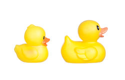 Family of yellow plastic ducks Stock Photography