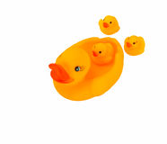 Family yellow rubber duck. Isolated on white background stock photo