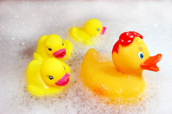 Family of yellow rubber ducks Royalty Free Stock Images